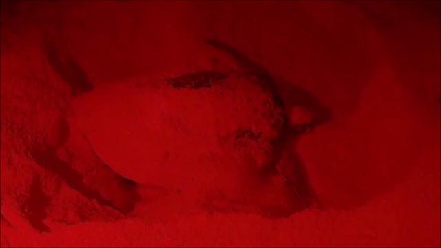 Cozumel turtle nesting